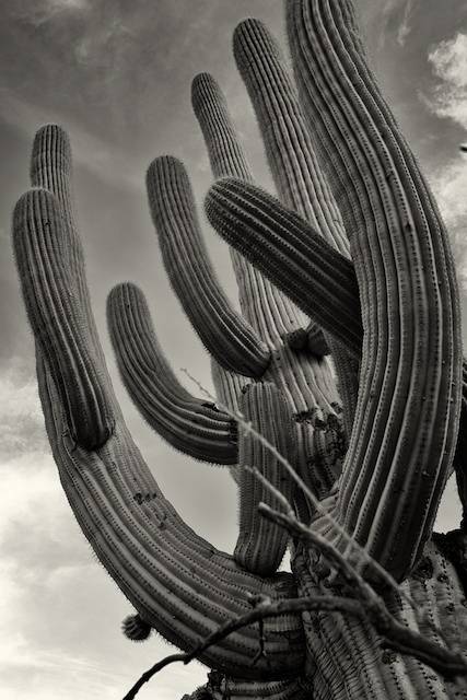 Sagauro Cactus, Superstition Mountains | LEICA X1 ELMARIT 24MM F/2.8 ASPH <br> Click image for more details, Click <b>X</b> on top right of image to close