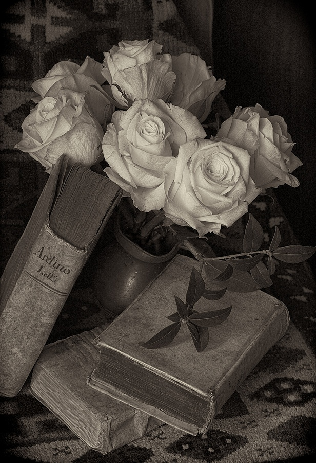 Roses for Aretino | LENS MODEL NOT SET <br> Click image for more details, Click <b>X</b> on top right of image to close
