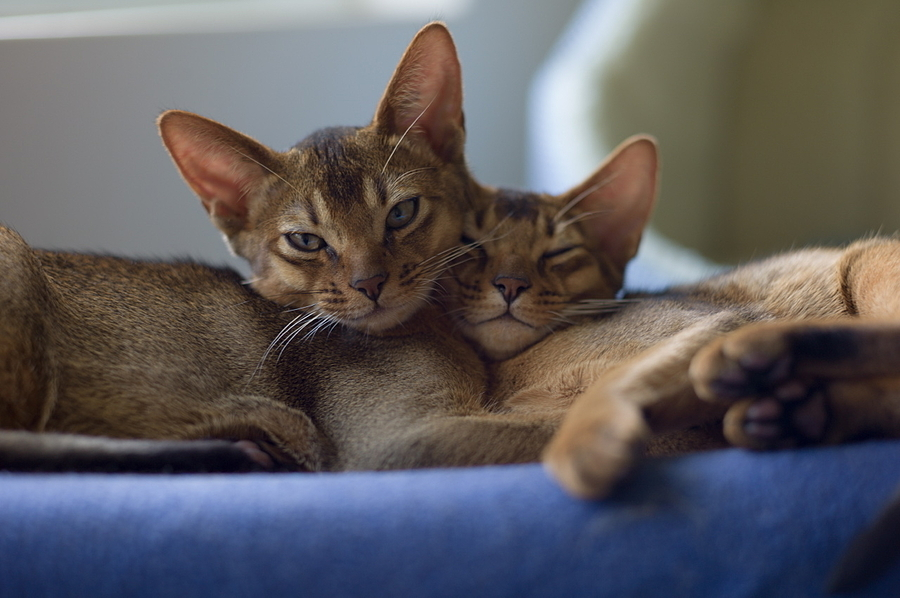 Felix & Chester cuddle | LEICA SUMMILUX-M 1:1.4/50 ASPH <br> Click image for more details, Click <b>X</b> on top right of image to close