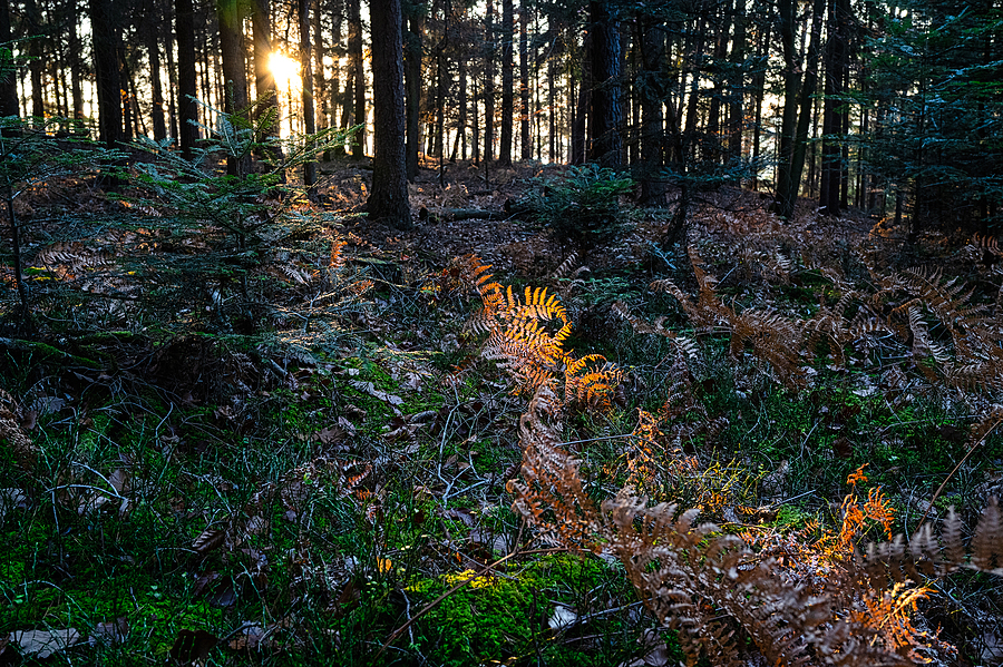 Sonnenstrahl am Nachmittag - late afternoon beam | LEICA SUMMILUX 1:1.7/28 ASPH <br> Click image for more details, Click <b>X</b> on top right of image to close